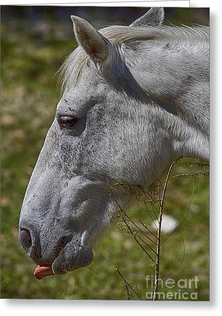 Eyelash Greeting Cards - White Horse Greeting Card by Anne Rodkin