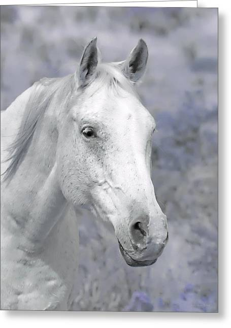 Quarter Horse Greeting Cards - White Horse in Lavender Pasture Greeting Card by Jennie Marie Schell