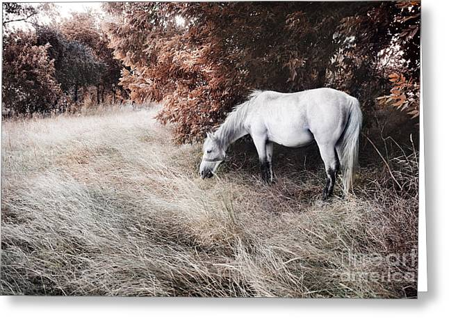 Summer Landscape Pyrography Greeting Cards - White horse Greeting Card by Jelena Jovanovic