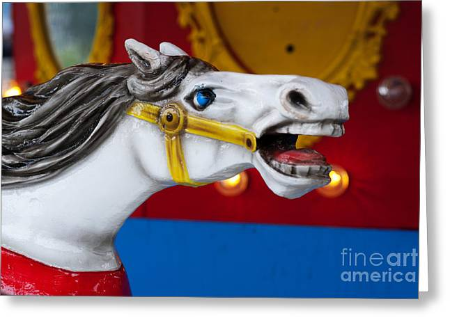 Amusements Greeting Cards - White Horse Greeting Card by Juli Scalzi