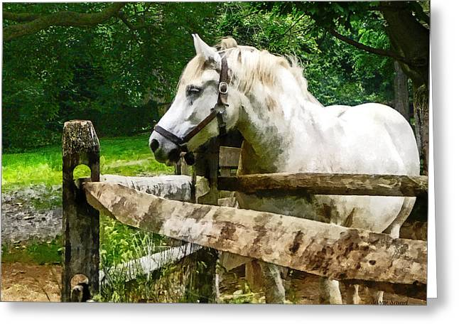 Fence Greeting Cards - White Horse Looking Away Greeting Card by Susan Savad