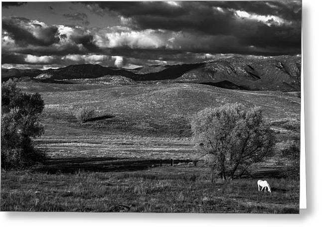 Big Sky Greeting Cards - White Horse Greeting Card by Peter Tellone