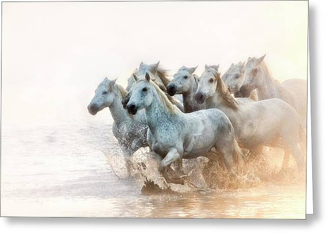 White Horses Of Camargue Running Greeting Card by Sheila Haddad