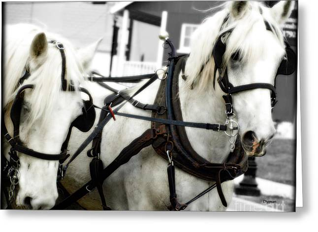 Collar Digital Art Greeting Cards - White Horses  Greeting Card by Steven  Digman