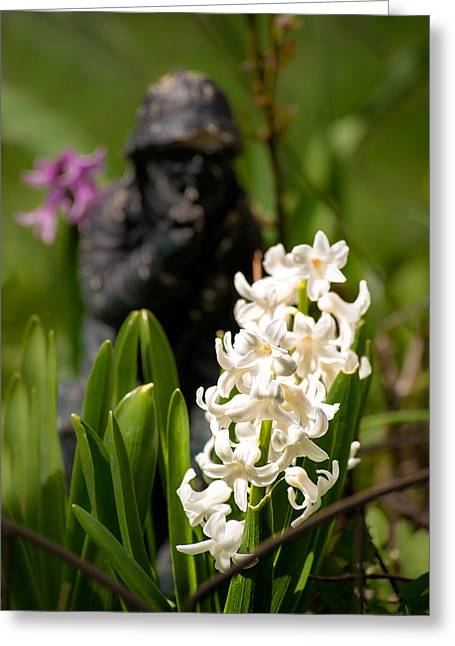 White Hyacinth In The Garden Greeting Card by  Onyonet  Photo Studios