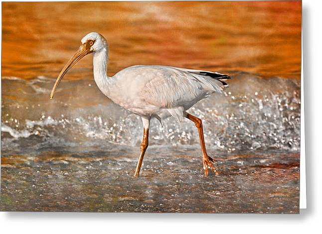Sea Birds Greeting Cards - White Ibis Stroll Greeting Card by Betsy A  Cutler