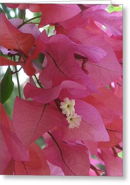 White In Pink Greeting Card by Russell Smidt