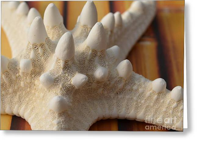 Bamboo House Greeting Cards - White Knobby Starfish Greeting Card by Carol McGunagle