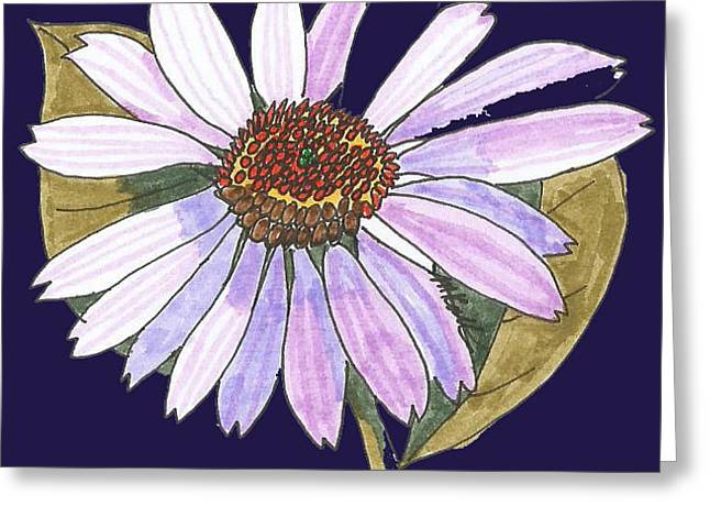 Aster Drawings Greeting Cards - White light purple aster Greeting Card by Miriam Kalliomaki