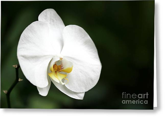 White Light Greeting Card by Sabrina L Ryan