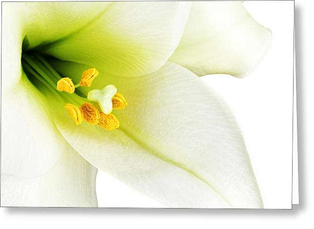 Pollen Greeting Cards - White lilly macro Greeting Card by Johan Swanepoel