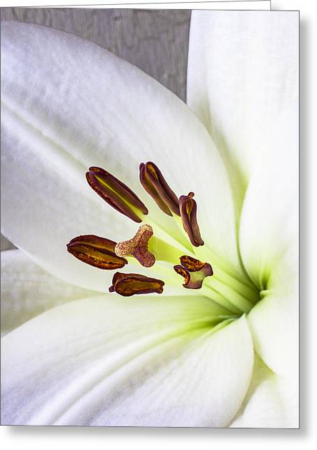 Stigma Greeting Cards - White Lily Close Up Greeting Card by Garry Gay
