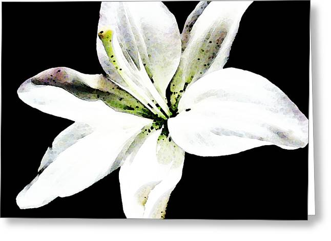 Day Lilly Digital Greeting Cards - White Lily - Elegant Black And White Floral Art By Sharon Cummings Greeting Card by Sharon Cummings