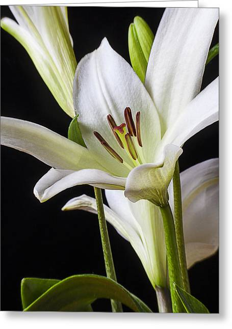 Stigma Greeting Cards - White Lily Greeting Card by Garry Gay
