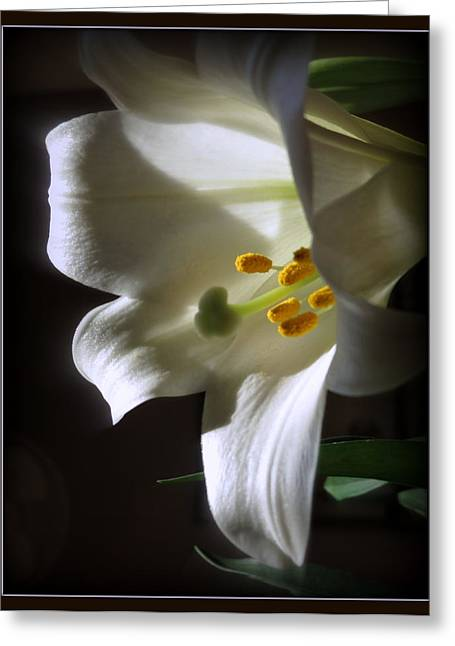 Kay Novy Greeting Cards - White Lily Greeting Card by Kay Novy