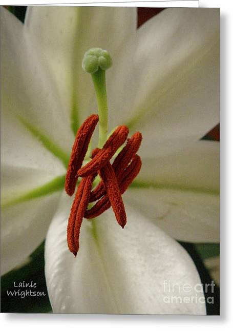 Lainie Wrightson Greeting Cards - White Lily Greeting Card by Lainie Wrightson