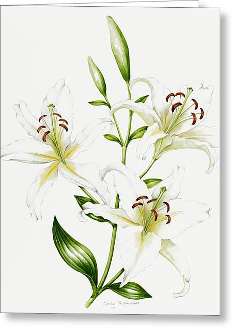 Flower Still Life Prints Greeting Cards - White Lily Greeting Card by Sally Crosthwaite