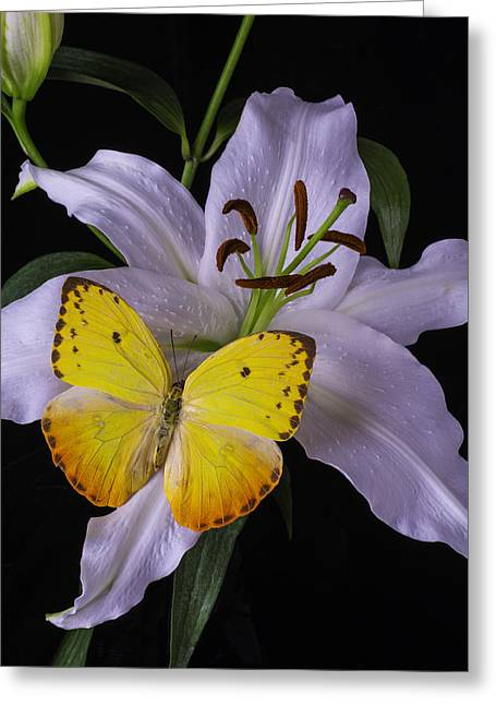 Oriental Tiger Greeting Cards - White Lily With Yellow Butterfly Greeting Card by Garry Gay