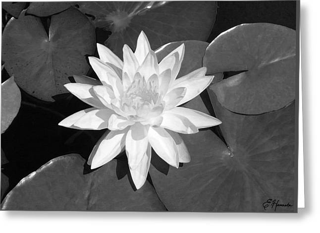 White Lotus 2 Greeting Card by Ellen Henneke