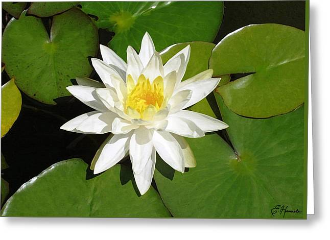 White And Green Greeting Cards - White Lotus Greeting Card by Ellen Henneke