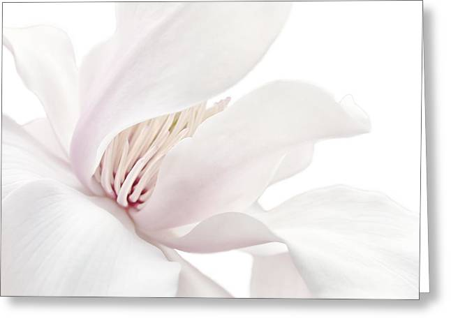 Shy White Magnolia Blossom  Greeting Card by Jennie Marie Schell