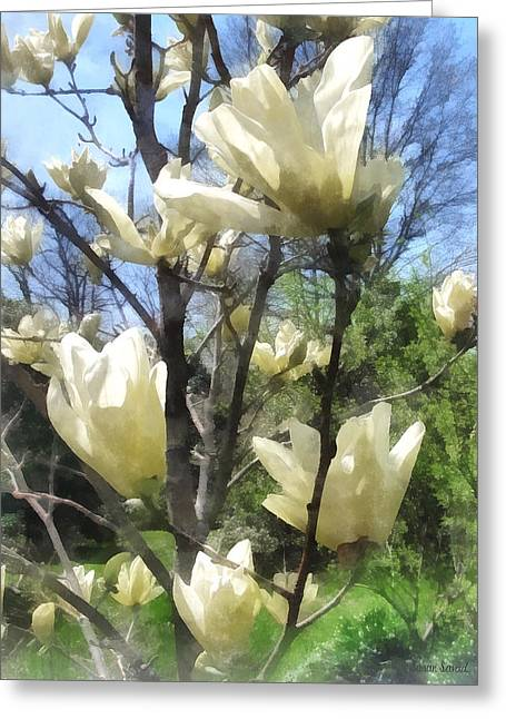 Flowering Tree Greeting Cards - White Magnolia Branches Greeting Card by Susan Savad