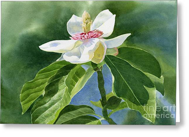 White Paintings Greeting Cards - White Magnolia Greeting Card by Sharon Freeman
