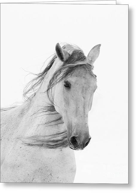 Berthoud Greeting Cards - White Mare in the Snow Greeting Card by Carol Walker