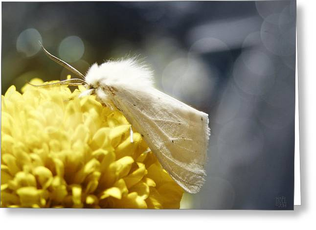 Catherine White Photographs Greeting Cards - White Moth Greeting Card by Catherine Noel