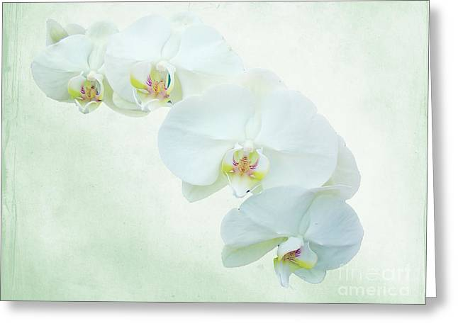 Enhanced Greeting Cards - White Moth Orchids - Phalaenopsis Greeting Card by Mother Nature