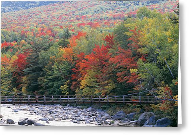 Tree Lines Greeting Cards - White Mountain National Forest Nh Greeting Card by Panoramic Images