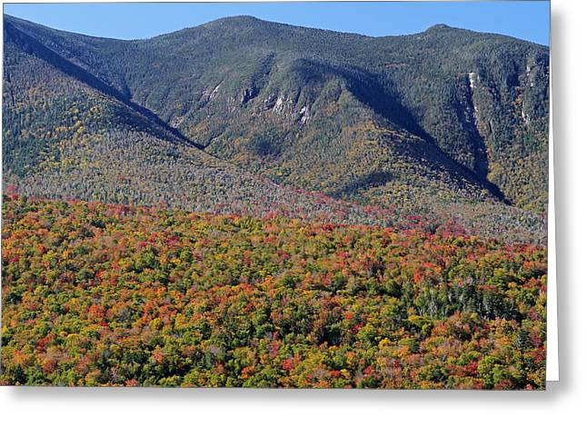 Forest Picture Greeting Cards - White Mountains Autumn Scenery  Greeting Card by Juergen Roth