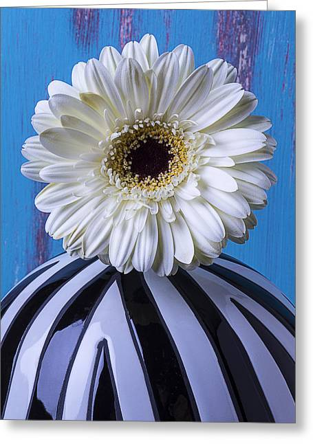 White Daises Greeting Cards - White Mum In Striped Vase Greeting Card by Garry Gay
