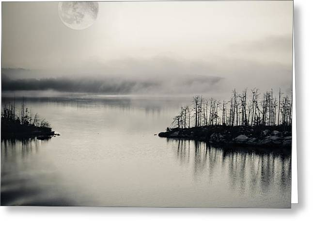 Moonrise Greeting Cards - White Night Greeting Card by Marianne Campolongo