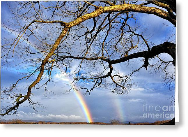 Double Rainbow Greeting Cards - White Oak and Double Rainbow Greeting Card by Thomas R Fletcher