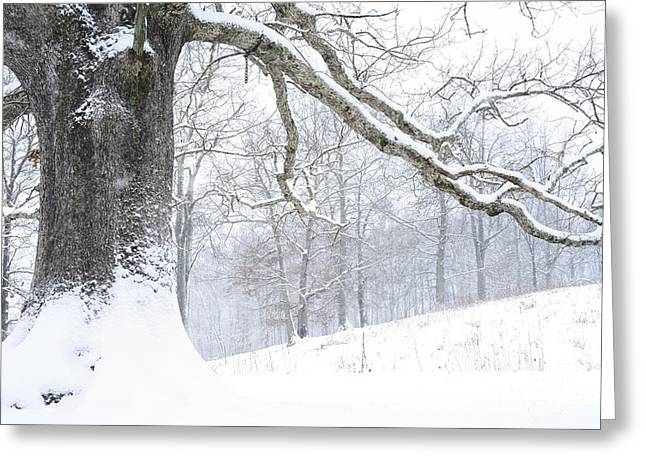 Appalachian Farm Greeting Cards - White Oak Tree in Snow Greeting Card by Thomas R Fletcher