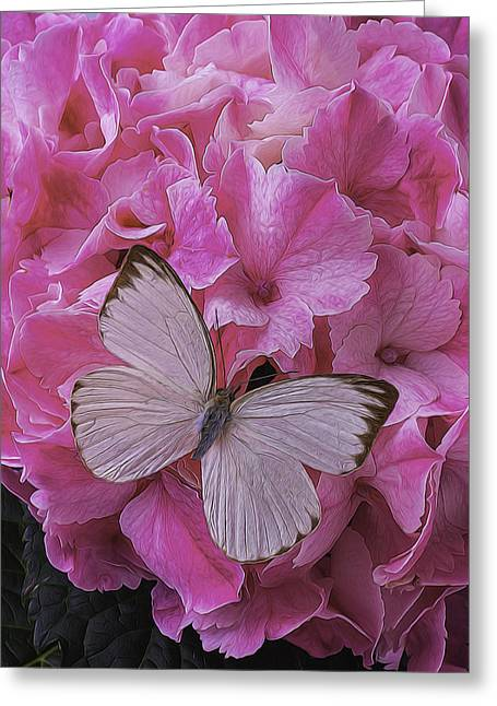 White Photographs Greeting Cards - White On Pink Greeting Card by Garry Gay