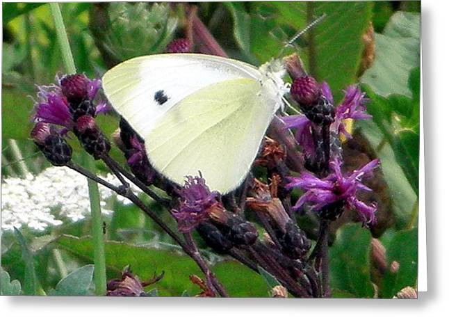 White On Purple On Green Greeting Card by Robert Lance