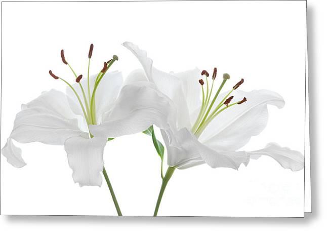 Virginal Greeting Cards - White On White Greeting Card by Ann Garrett