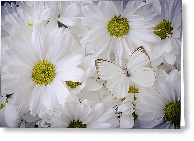 Seasonal Bloom Greeting Cards - White On White Greeting Card by Garry Gay