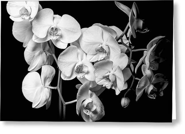 Orchid Petals Greeting Cards - White Orchid - Black and White Greeting Card by Erik Brede