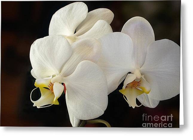 Yellow Stamen Greeting Cards - White Orchid - Doritaenopsis Orchid Greeting Card by Kaye Menner