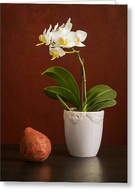Ceramic Digital Greeting Cards - White orchid Greeting Card by Eduard Moldoveanu