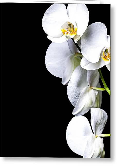 Orchid Petals Greeting Cards - White Orchid II Greeting Card by Erik Brede