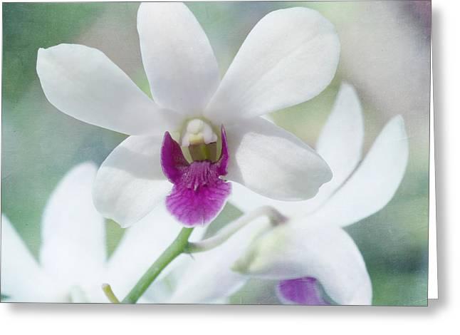 White Orchid Greeting Card by Kim Hojnacki