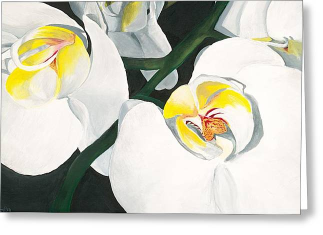 Lisa Bentley Greeting Cards - White Orchid Greeting Card by Lisa Bentley