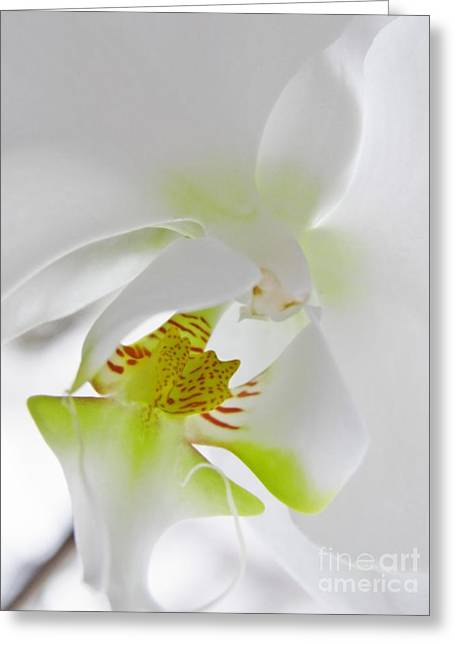 White Orchid Greeting Card by Sarah Loft