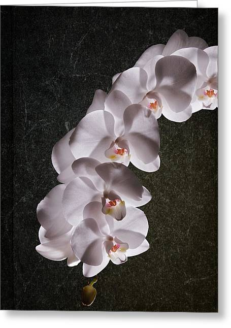 Floral Arrangement Greeting Cards - White Orchid Still Life Greeting Card by Tom Mc Nemar
