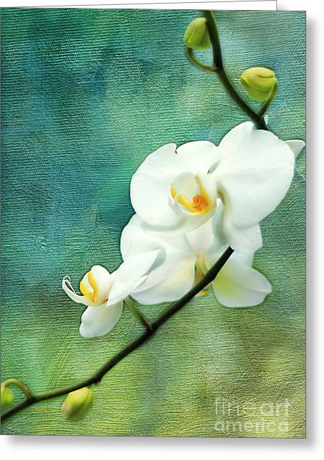 White Orchids Greeting Card by Darren Fisher