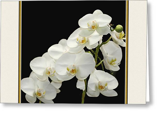 Nature Scene Greeting Cards - White Orchids II Greeting Card by Tom Prendergast
